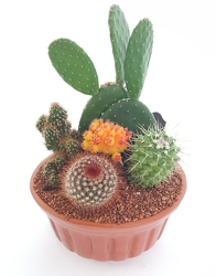 Cactus Dishgarden from Lagana Florist in Middletown, CT