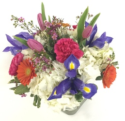 Spring into Spring from Lagana Florist in Middletown, CT
